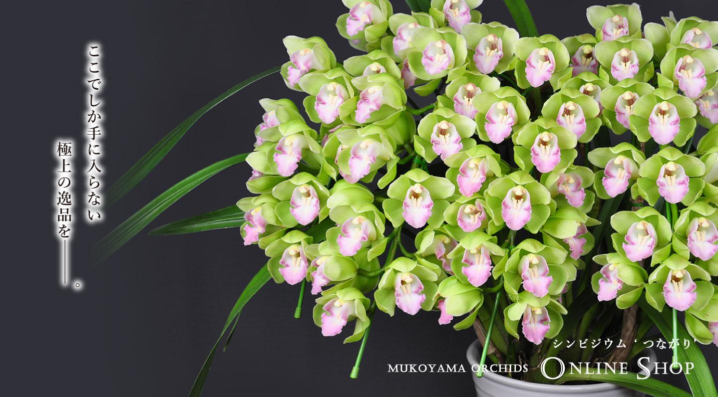 https://mukoyamaorchids.com/shopbrand/youran/