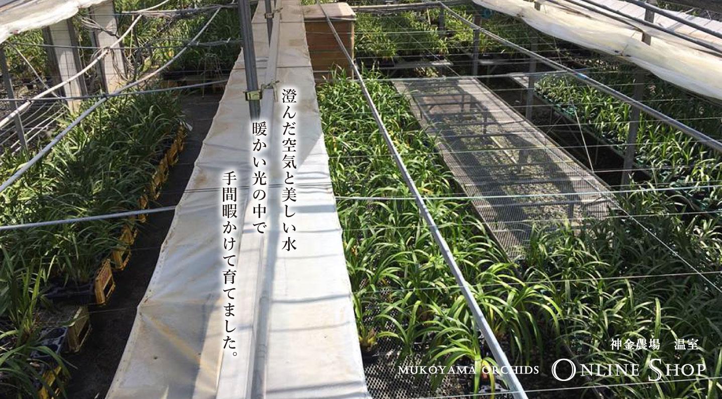 http://www.mukoyama.jp/